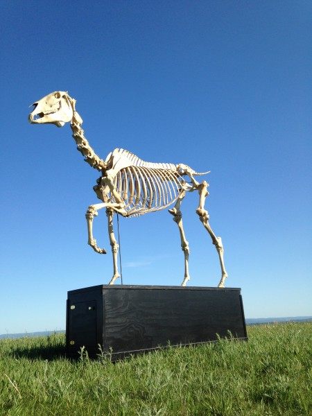 Original reference skeleton built for Hans Haacke's Gift Horse project.